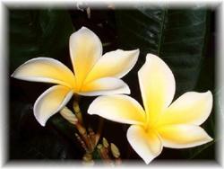 fiori_di_Bach1